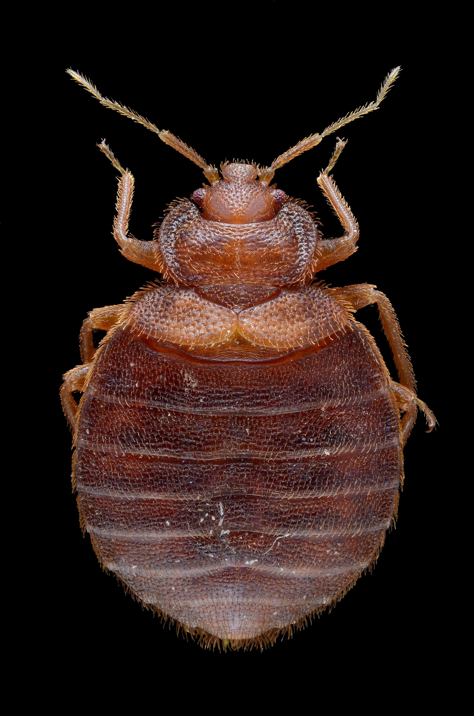 removal bugs room london in find services inoculand bed treatment ltd survey pest control to